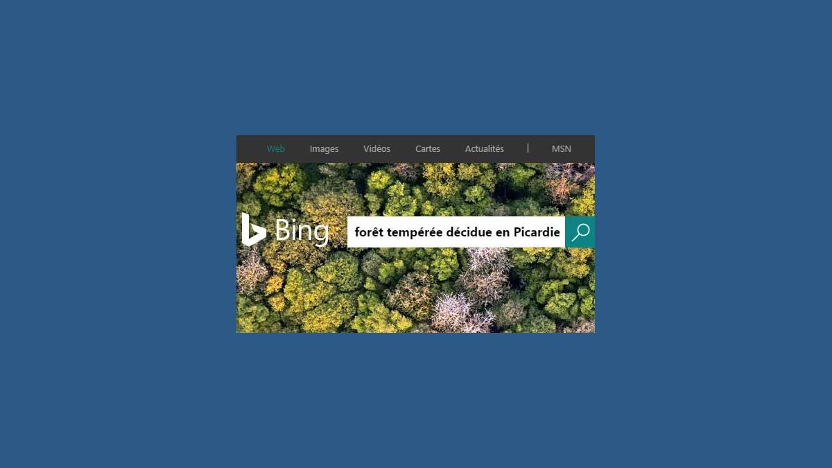 Bing : Forêt tempérée décidue en Picardie